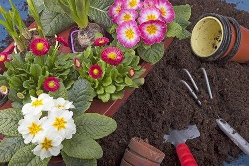 家の庭でも育ちやすい10種類の植物