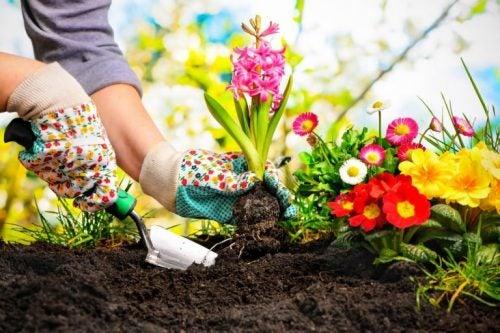 育ちやすい植物
