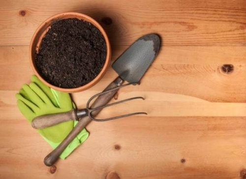 育てやすい植物