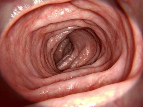 大腸での吸収