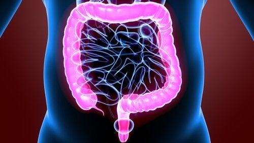 驚くべき大腸の生理学