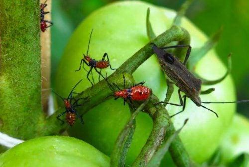 市販の殺虫剤を使わない害虫駆除法5種