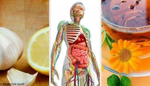 リンパデトックスを行う6つの自然療法