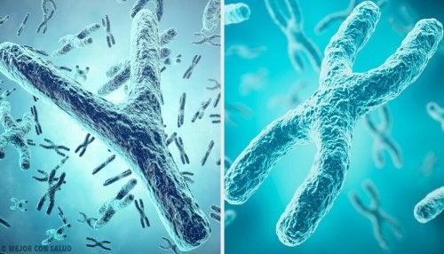 性別の遺伝的起源:XとYの染色体