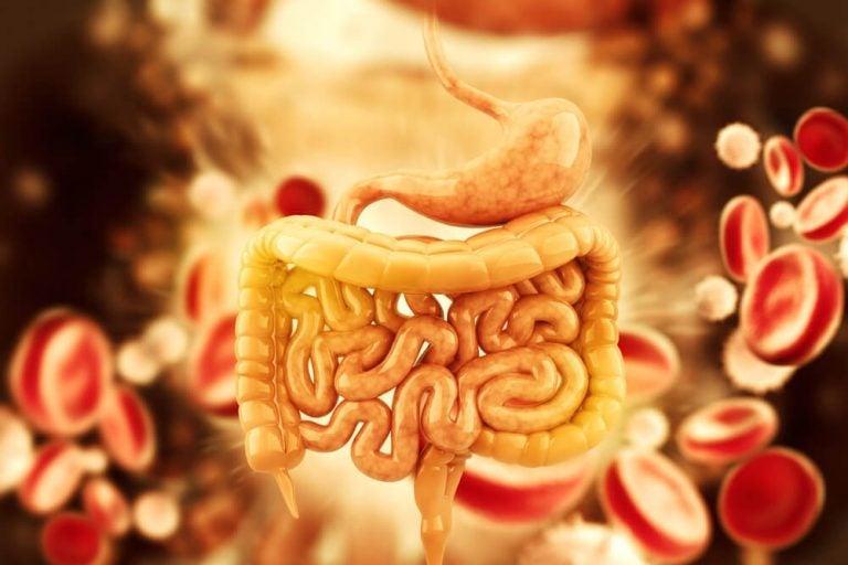大腸のデトックスに! ハーブティー5選
