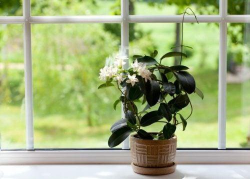 観葉植物の葉を掃除する