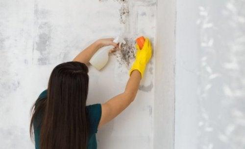 家の中のカビを除去する方法