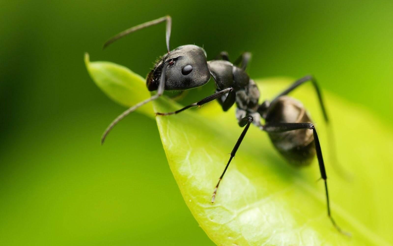 アリの駆除