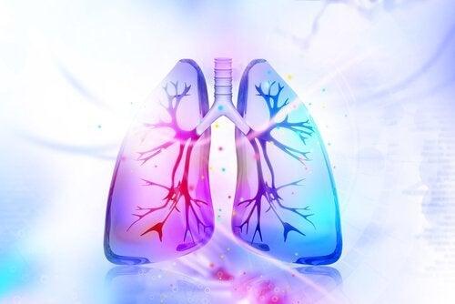 肺のデトックスを促す自然療法