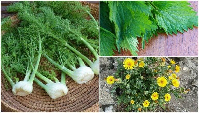 驚きの食用植物8選