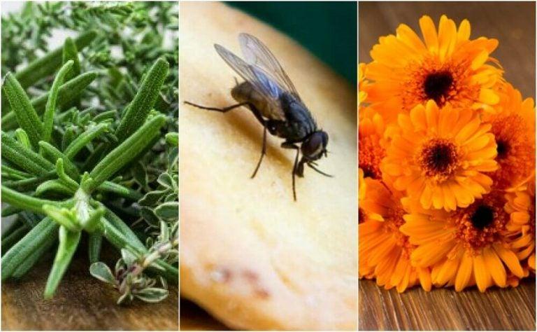 ハエを駆除する6つの自然な方法