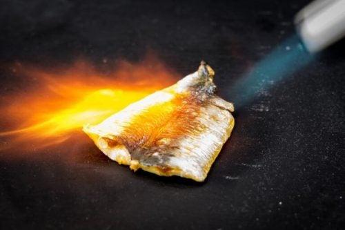 バーナーで焼く魚