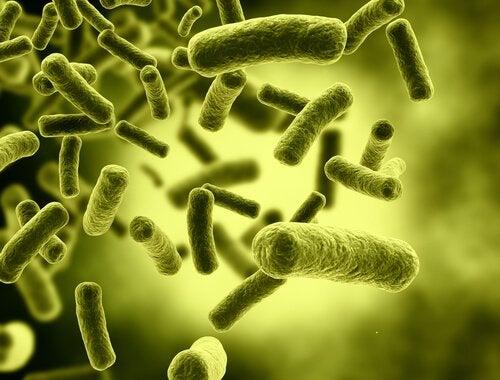 毒素 胃腸炎