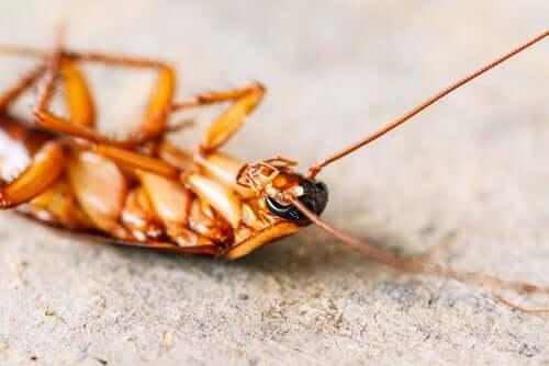 ゴキブリ駆除法