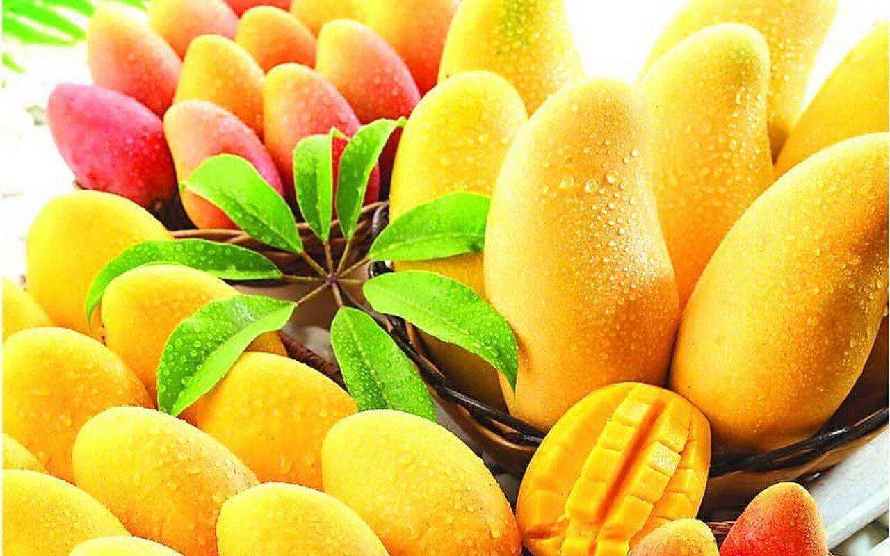 マンゴー トロピカルフルーツ