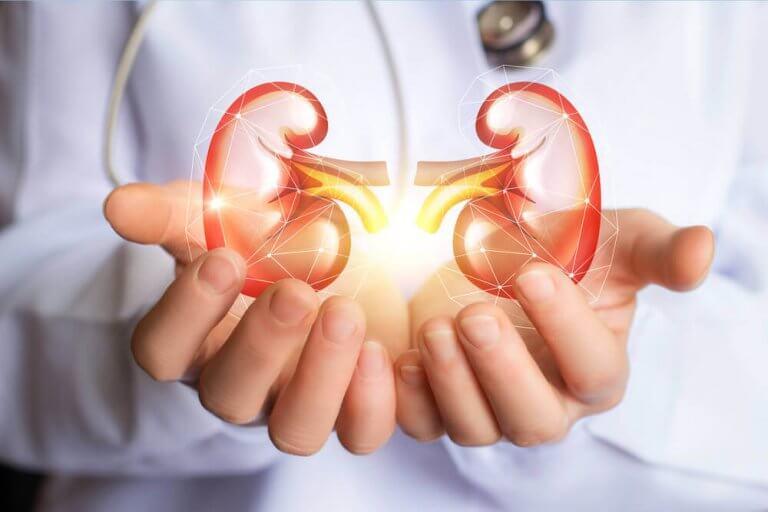腎臓の浄化に高い効果を発揮するデトックス法