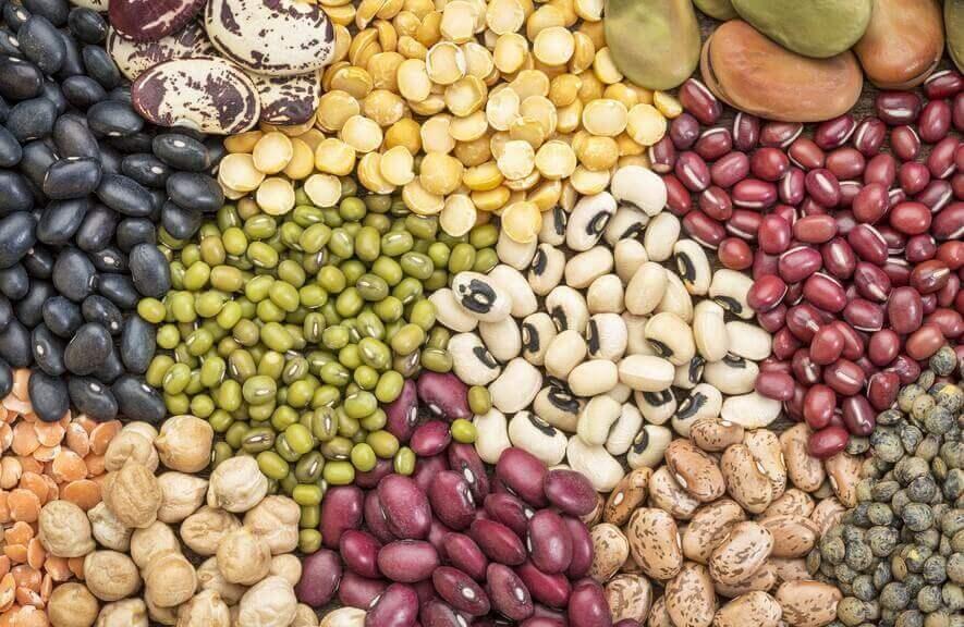 豆類の栄養