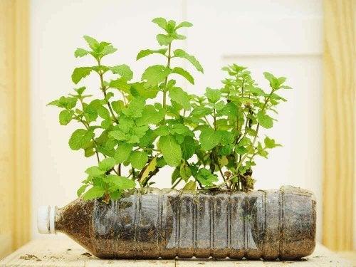 ペットボトル 植木鉢