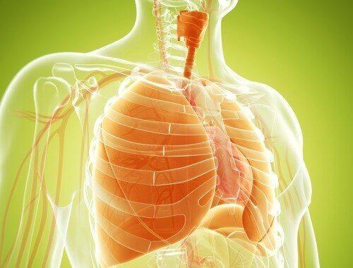 肺のデトックスに役立つ自然療法