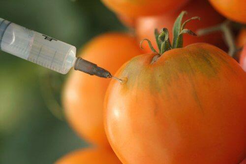 遺伝子組み換えトマト