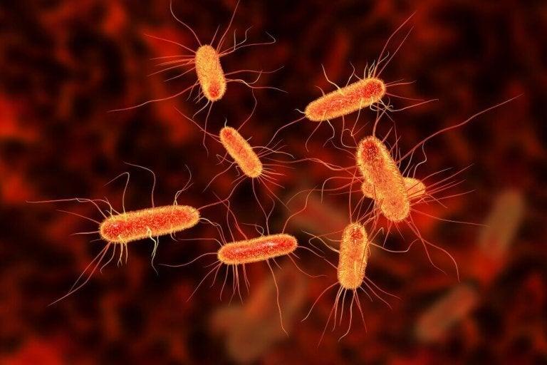 腸管感染症のための3つの自然療法