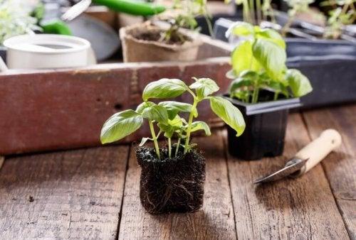 観葉植物 植物 家  恩恵