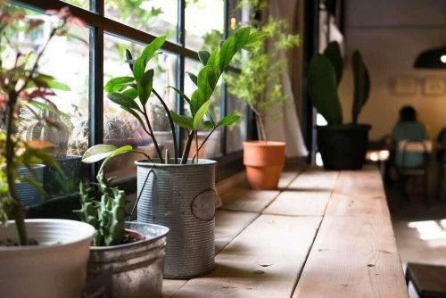 自宅に置いている植物から得られる健康的恩恵とは?