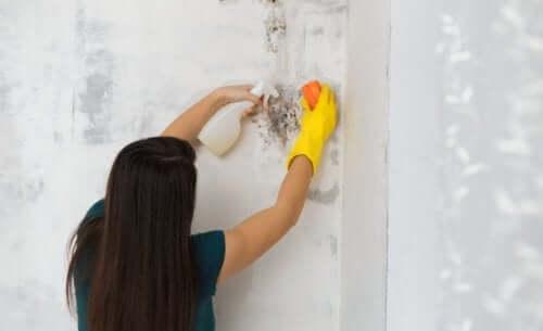 壁の掃除をする女性