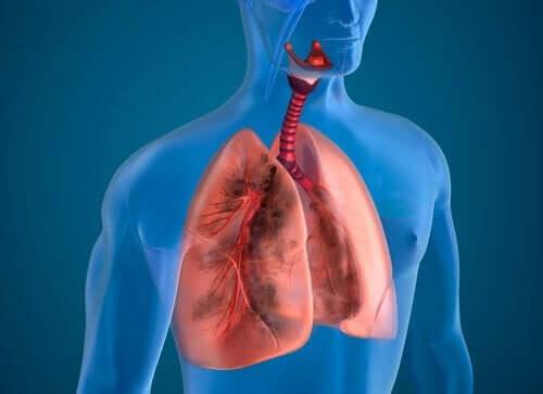 肺の機能を助けるかもしれない食べ物