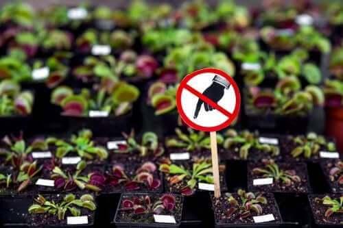 取扱注意:自宅に置くべきではない危険な植物7選