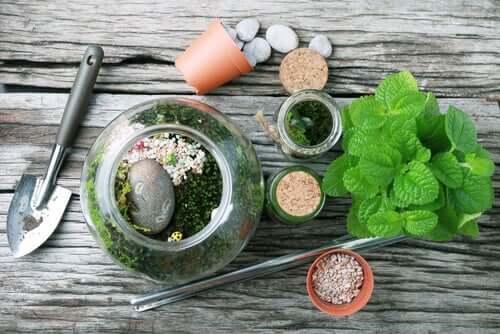 テラリウム お庭のデコレーションに:ガラス瓶を再利用する方法
