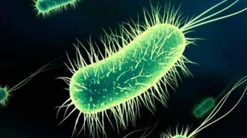 膀胱炎の原因となる細菌