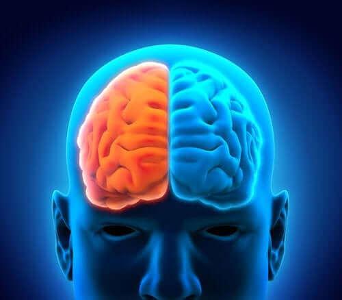 うつ病が脳に与える影響である収縮