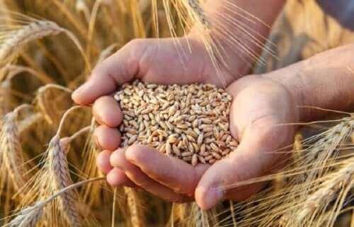 ライ麦の利点