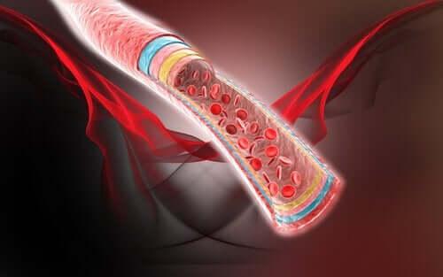 血流を良くする自然療法4つ