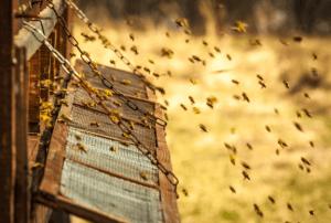 ハチ ローヤルゼリー