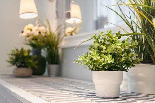 室内で観葉植物を育てるための9つのヒント