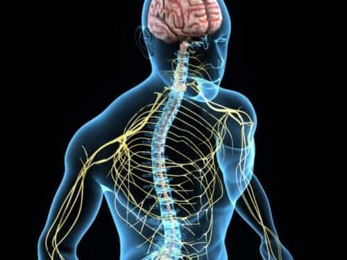 神経系 コリン