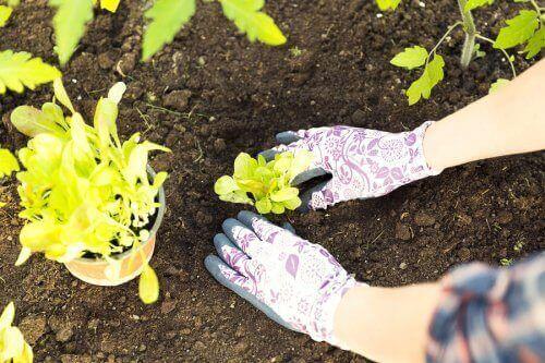 植物を植え替えるときに覚えておきたいこと 植物を取り出す