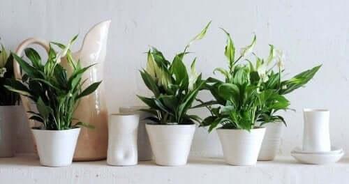 室内で観葉植物を育てるための9つのヒント 環境