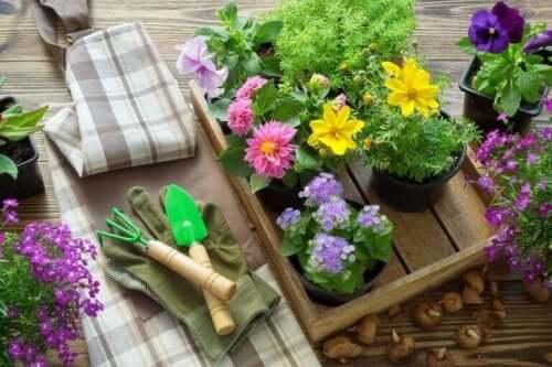 植物を植え替えるときに覚えておきたいこと 季節