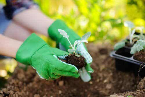 植物を植え替えるときに覚えておきたいこと