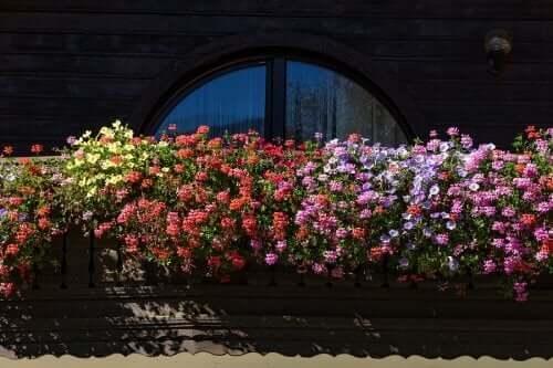 小さな庭でも大丈夫! 香りの良い花5選