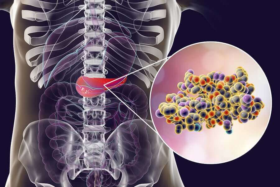 人工甘味料が肥満の解消に役立つってホント? 腸内