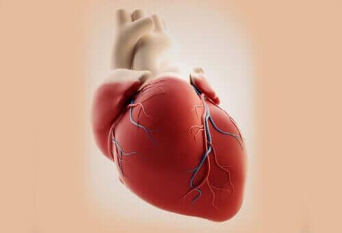 総動脈幹症とは? 原因、症状、治療法について