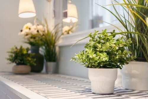 居心地の良い家 観葉植物