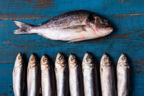 青魚を食べる利点とは