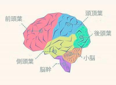 脳葉について知っておくべきすべてのこと