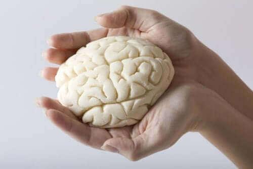 脳葉について知っておくべきすべてのこと 手の中の脳