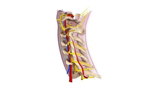 頚神経について知っておくべきすべてのこと